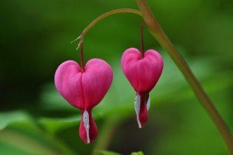 La dignidad, esa flor que debes aprender a reconocer, como amiga y compañera.